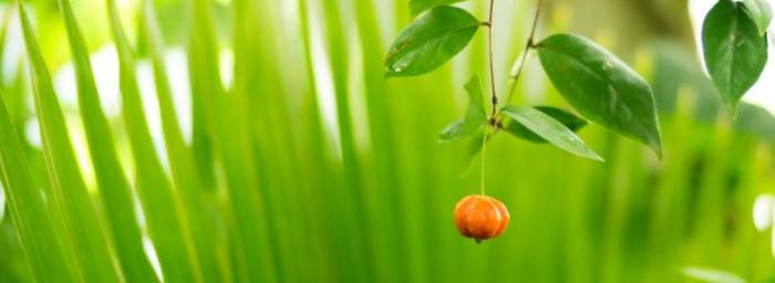 Low Hanging Fruit Opt-in USA NFJA - 2016